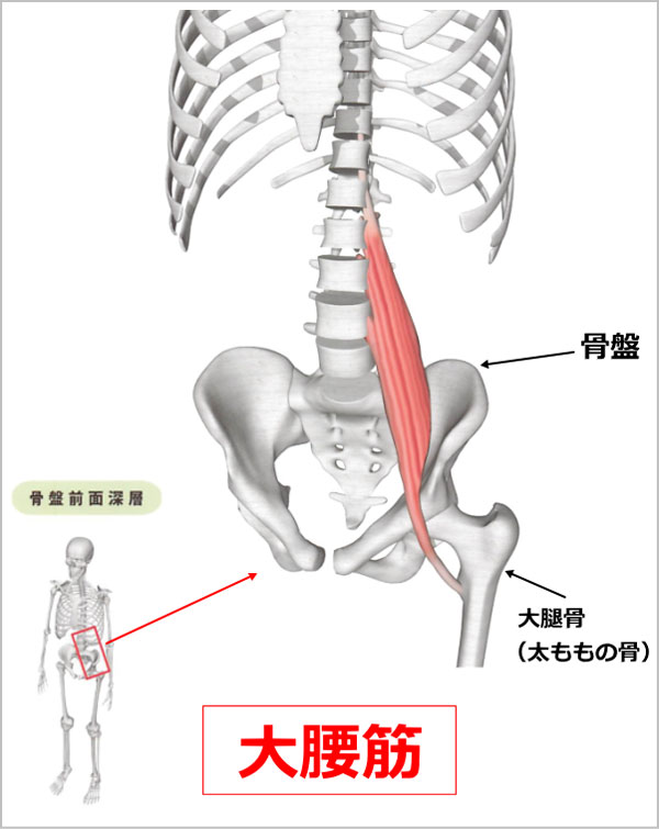 股関節 大腰筋