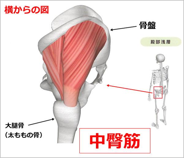 股関節 中臀筋