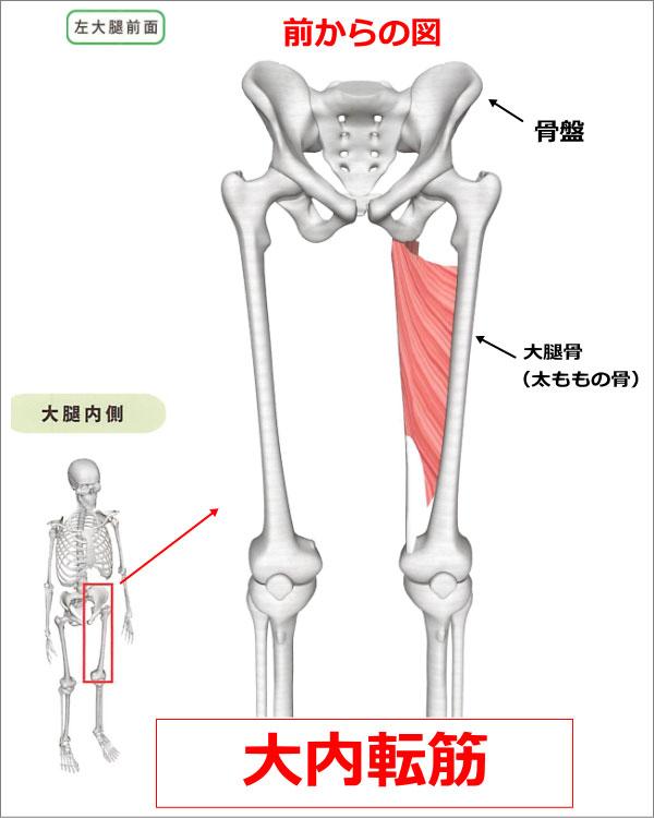 股関節 大内転筋