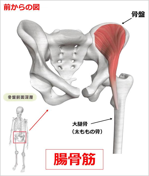 股関節 腸骨筋