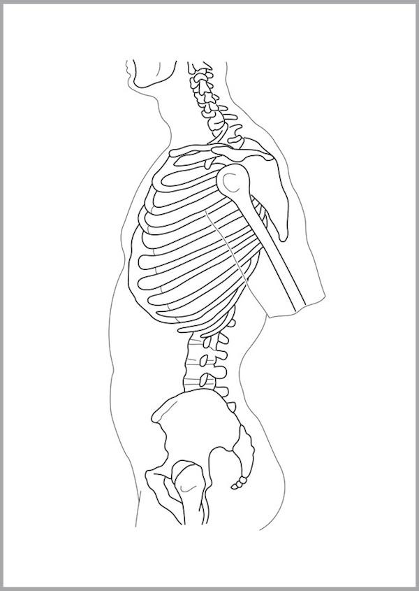 骨格 横 頚椎〜腰椎骨盤2016