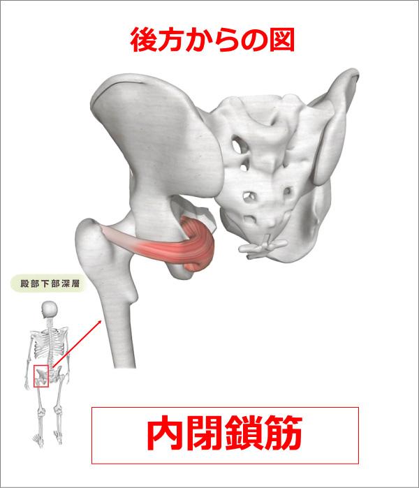 股関節 内閉鎖筋