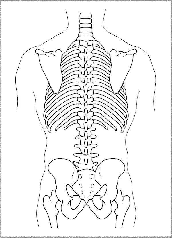 背面 骨格解剖2