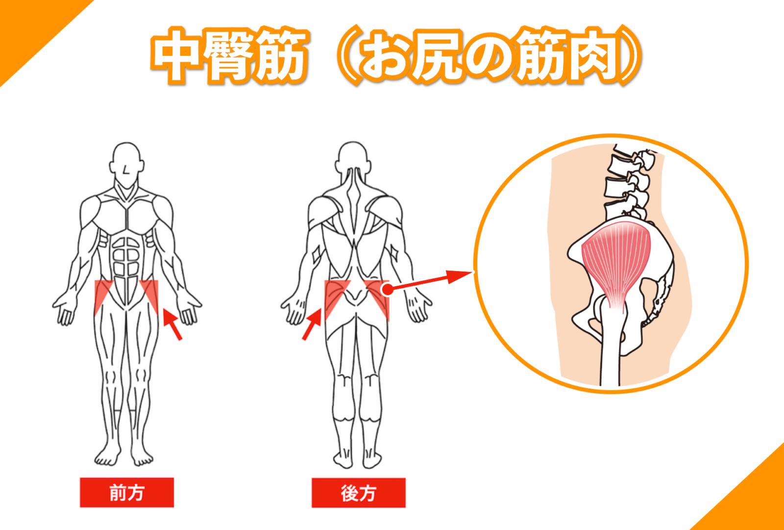 中臀筋(お尻の筋肉)