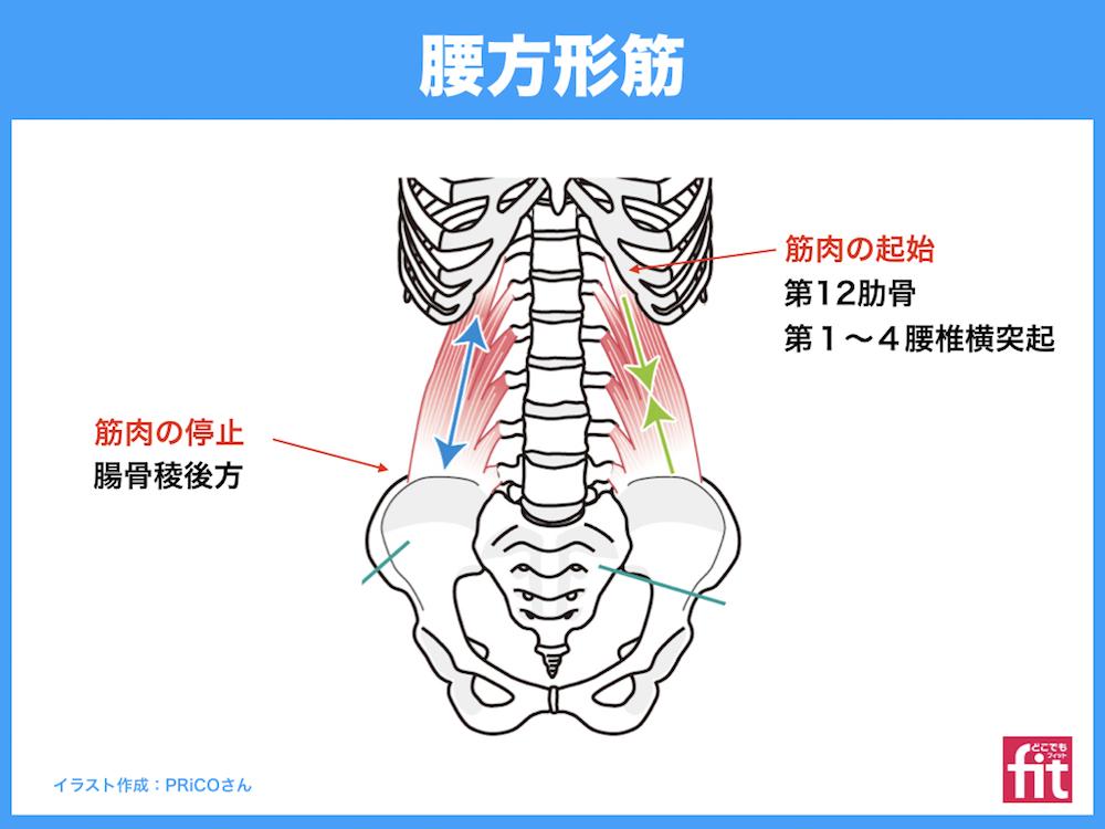 筋 腰 方形 腰方形筋と呼吸