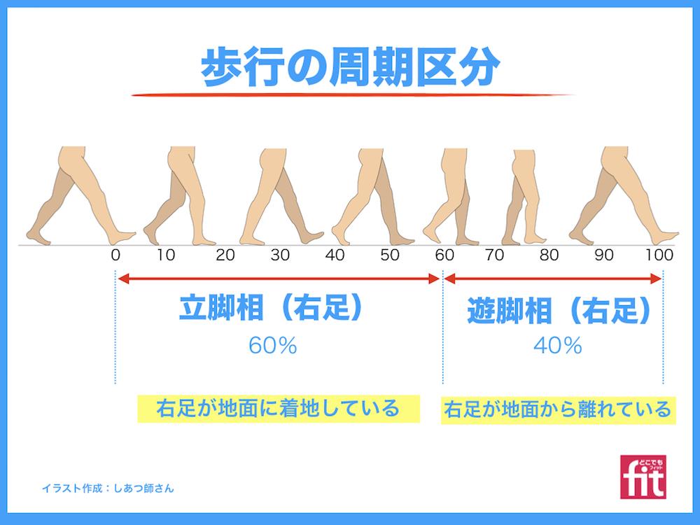 歩行の周期区分 立脚相、遊脚相